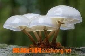 怎样把蘑菇洗干净 洗蘑菇的方法技巧